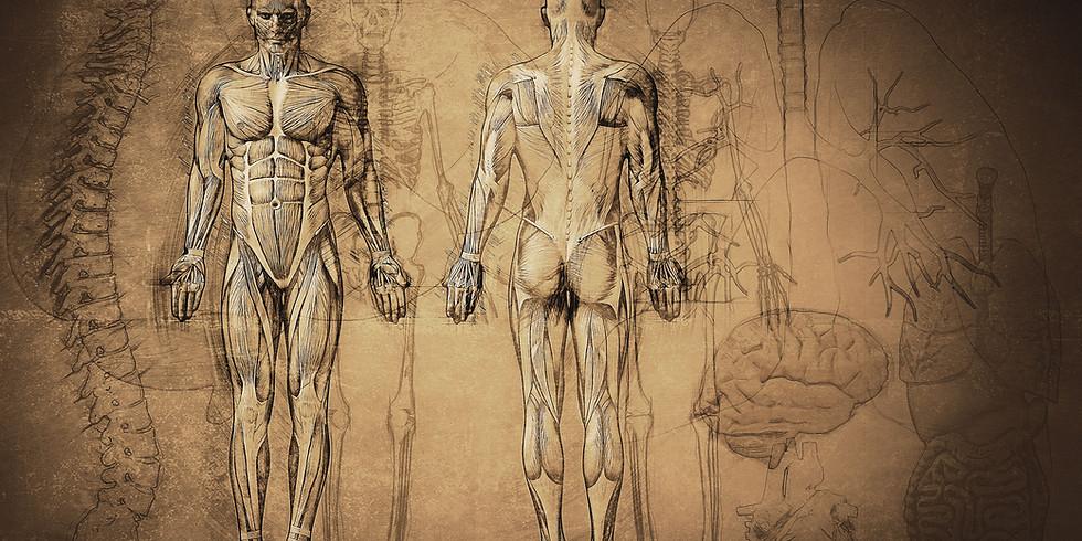 Anatomy I 36 Hour Course