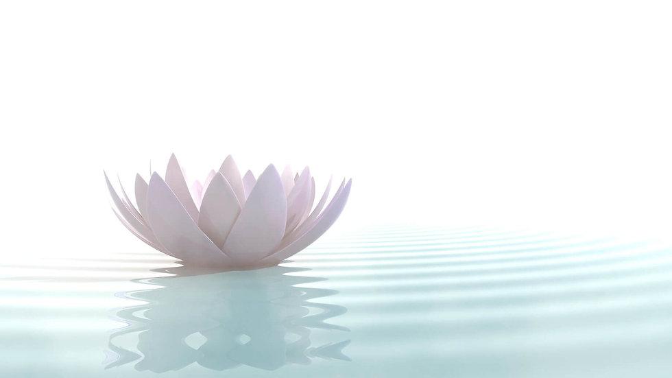 lotus-zen-e1483030980455.jpg