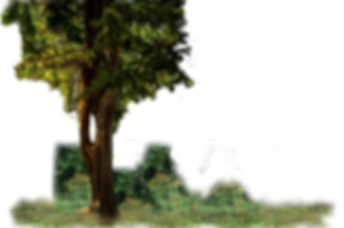 tree no flowers left.png