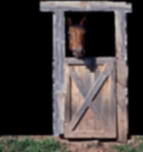 horse-in-door.png
