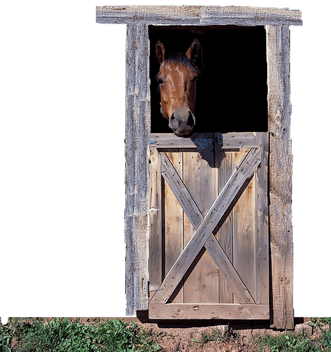 horse-in-door.png