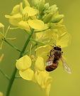 Produits de la ruche aloevera37000
