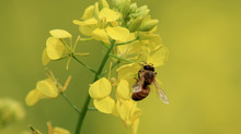 Rep. Driscoll Signs Letter Supporting Pesticide Regulations That Protect Pollinator Health