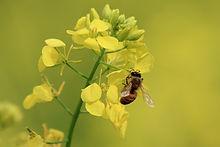 Bee Control Canton Michigan