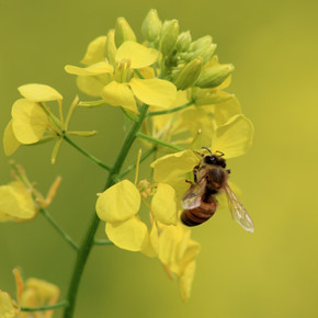 Save the BEES: Honor Mother Nature on Mother's Day!