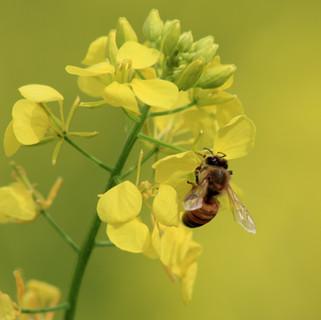 Centro del Alérgico: Ideas para evitar y controlar las picaduras de insectos