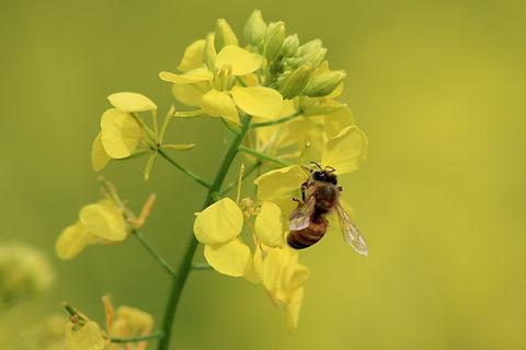 Una abeja sobre una flor. Un simbolo de la naturaleza que nos representa.