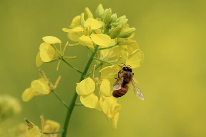 Les bienfaits de la ruche