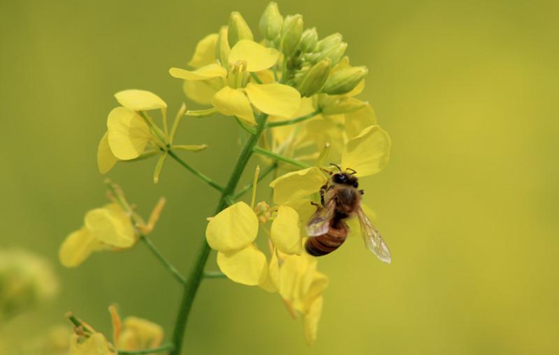 Trésors de la ruche...