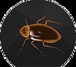 pest control4.png
