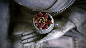 flower in stone buddha's bowl.png