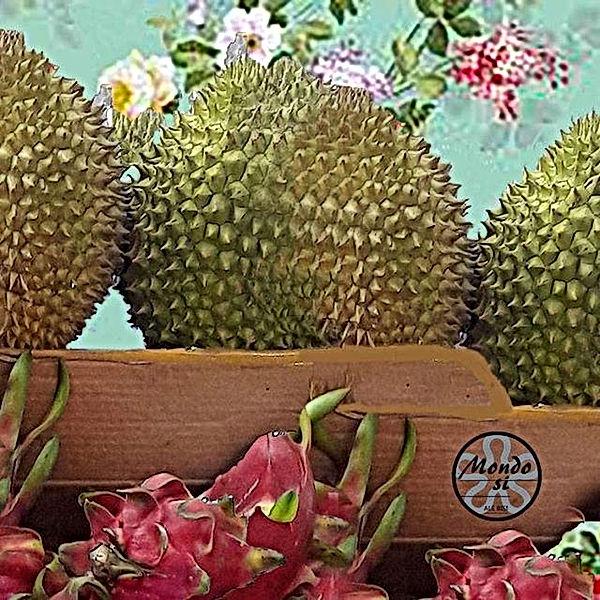 Alessandra Bisi Mondo si 'Duriandragon'
