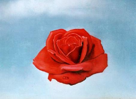 The meditative rose- Salvador Dalì