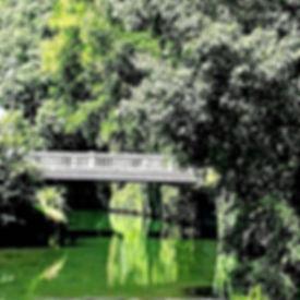Foto#green#www.alebisi.jpg