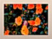 Acid flower collection by Mondo Si 'oran