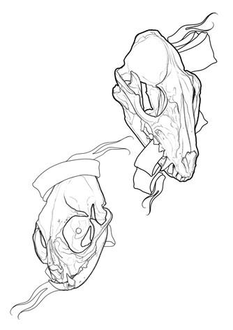 Skulls - Wolf / Cat