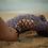 Thumbnail: Naia loves swimwear