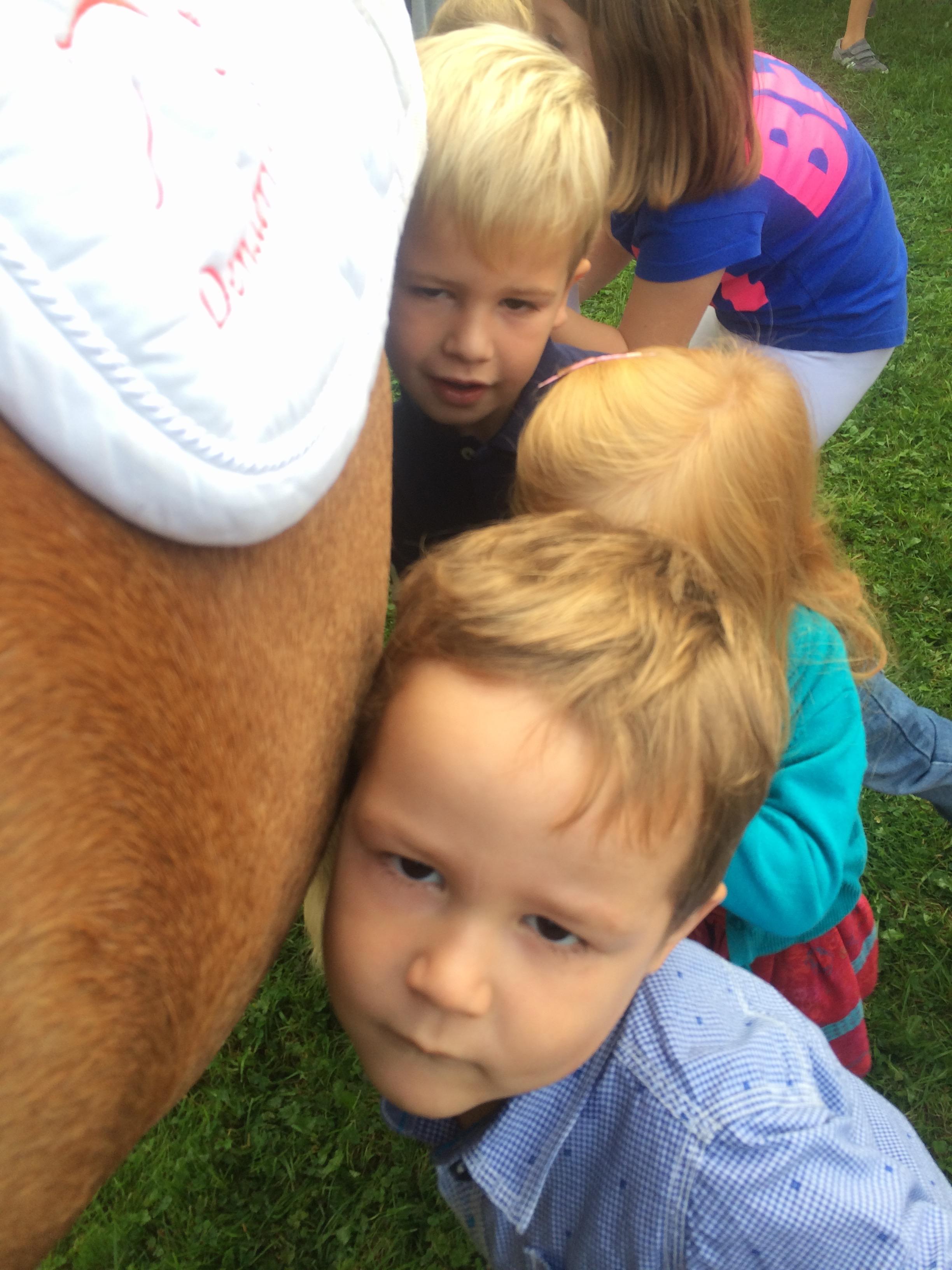 Het knorren van een paardenmaag