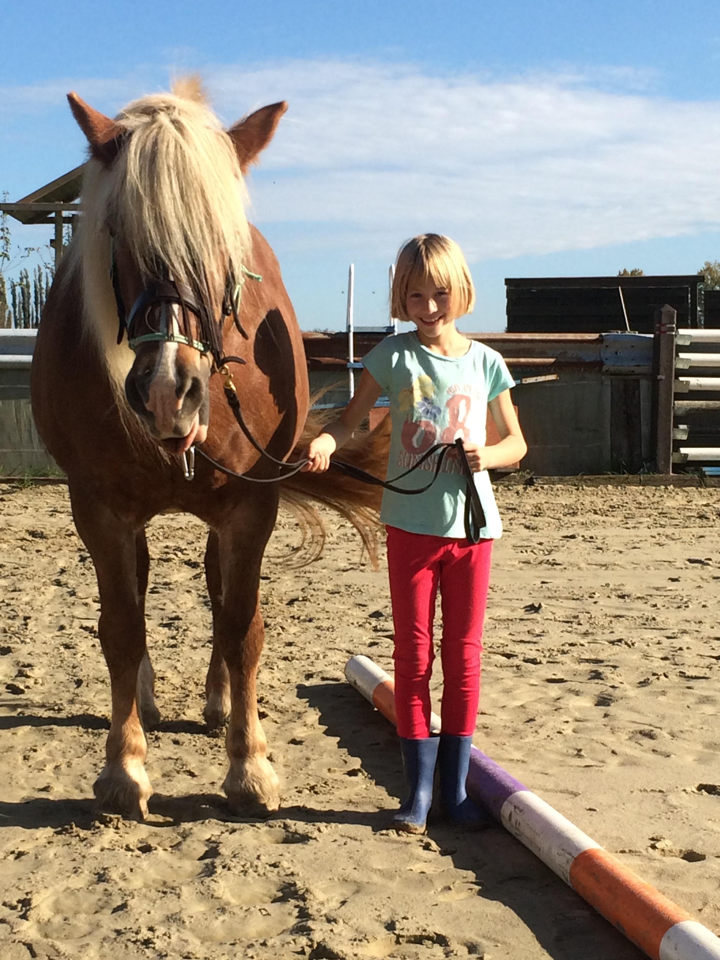 Hoe begeleid ik een paard?