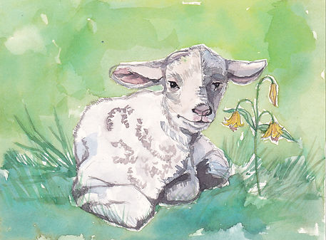 Lamb and Meadow Lily_0001.jpg