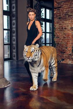 тигр в фотостудии