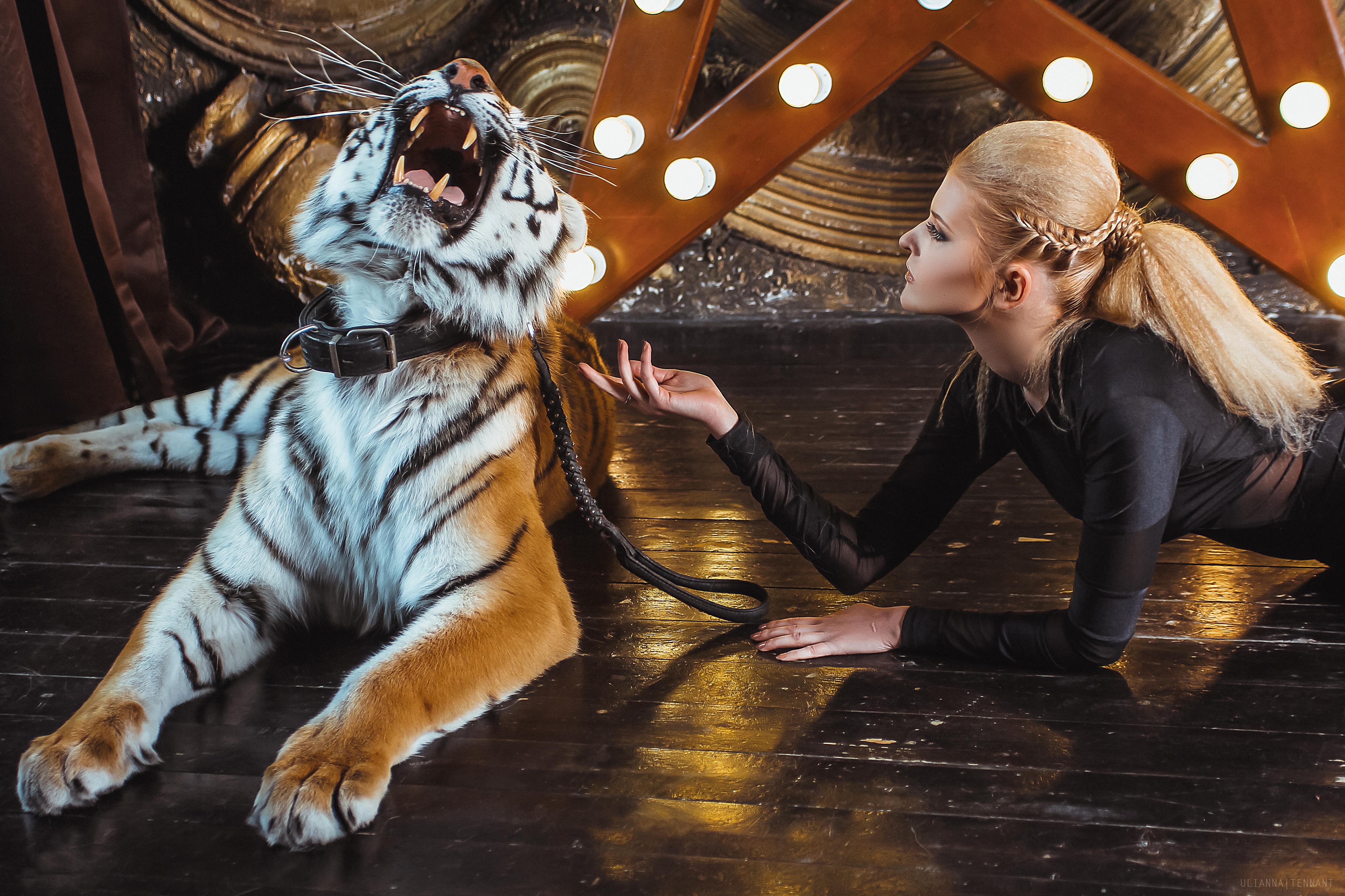 свирепый тигр и укротительница