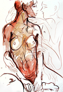 Estudios anatómicos XII