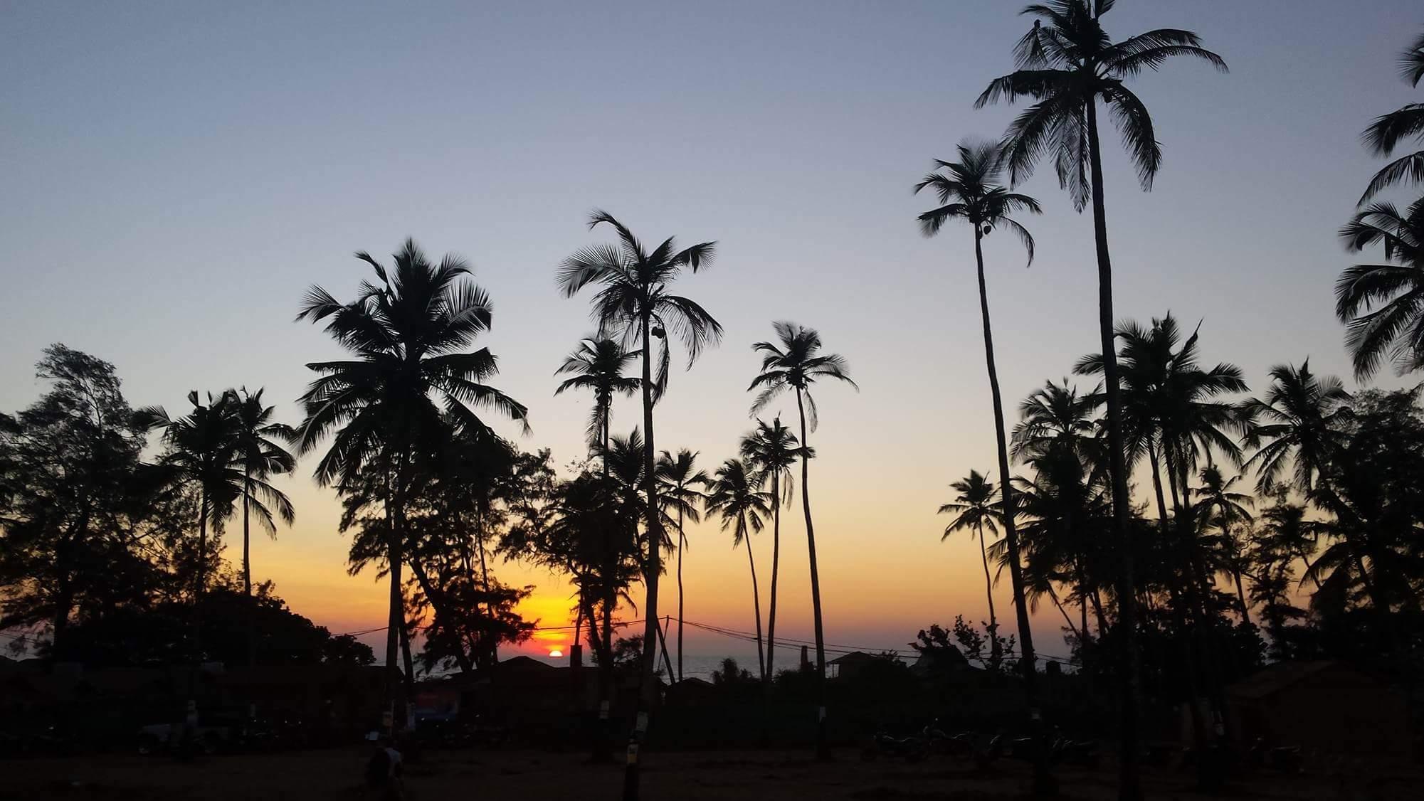 Palmensunset.jpeg