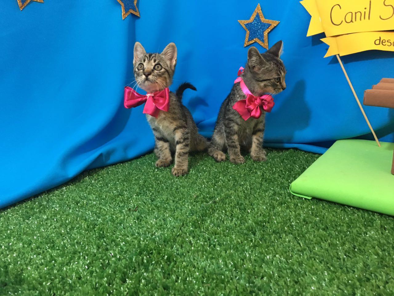 Gatos castrados para adoção