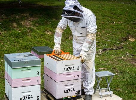 Hive flyers: meet the honey producers