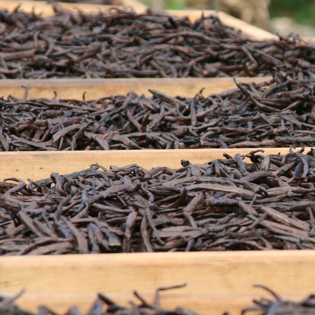 Vanilla Drying