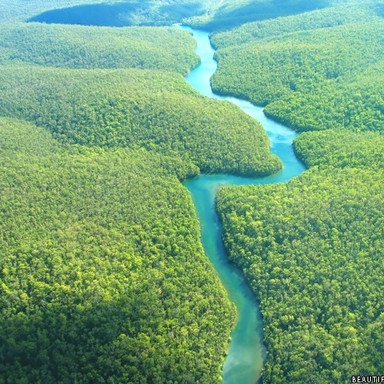 amazon-rainforest.jpg