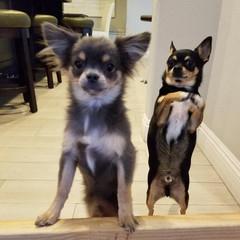 Astro & Archie