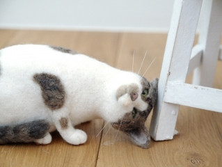 9/12~nuta &「先生と迷い猫」