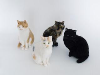 あすから「猫とその仲間たち」展
