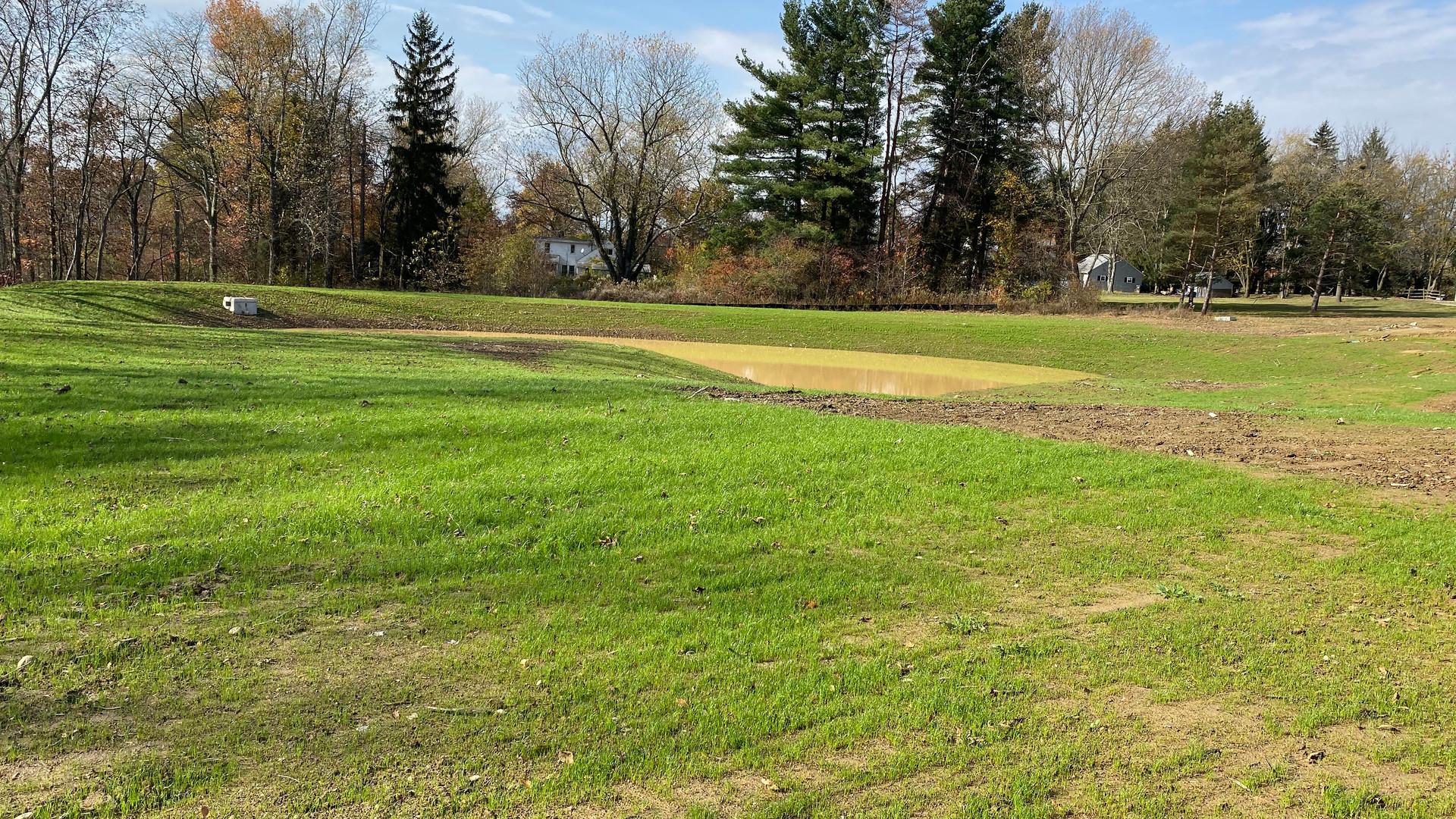 New grass at back retention pond.