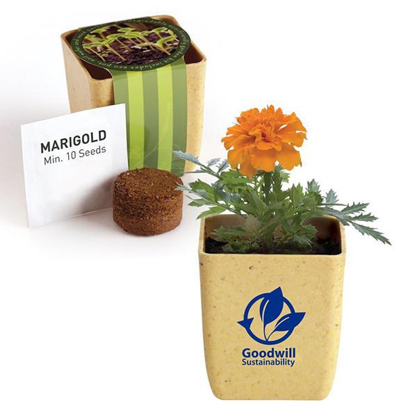 marigold flower inside of branded pot, unopened packaging
