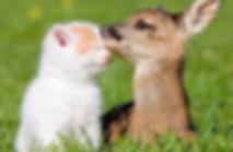 Bambi and Peanut.jpg