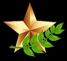 звезда и ветвь.png