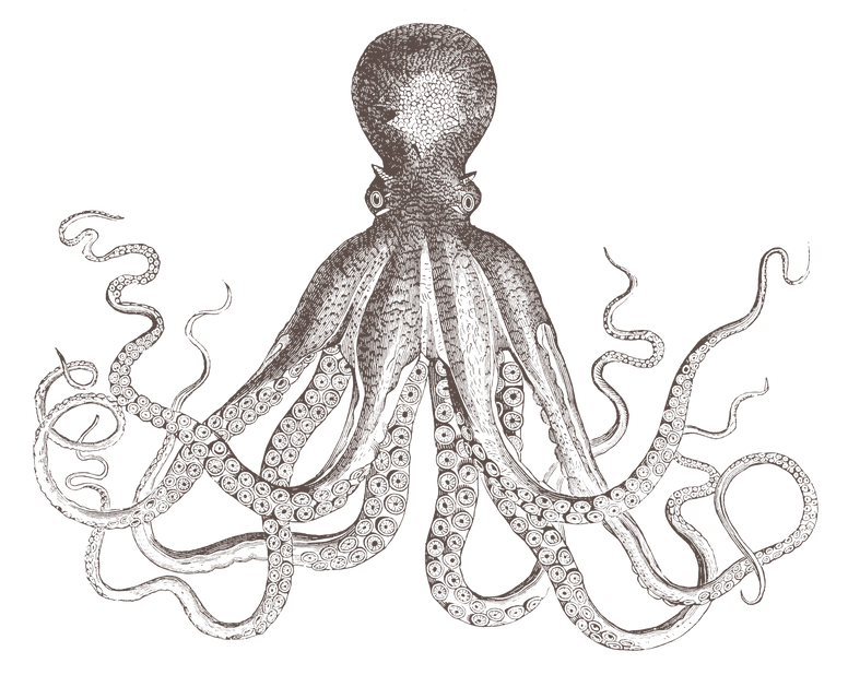 Octopus-Taupe.png