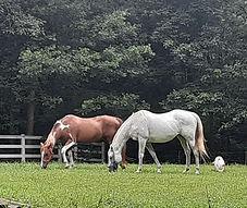 horse sisters 2.jpg