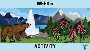 Week 5 Activity.png