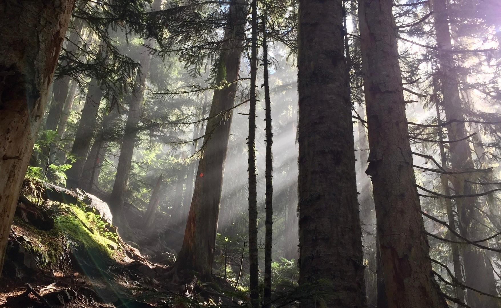 slide 20 - forest-1714242_1920.jpg