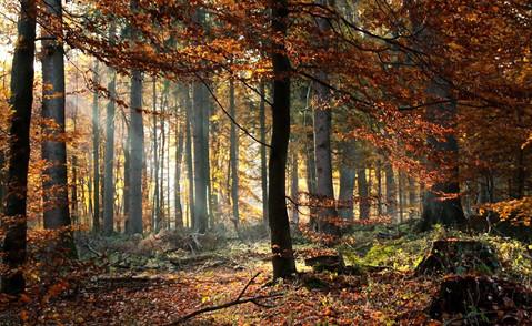 slide 15 - forest-4705762.jpg