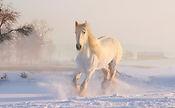 white-horse-3010129_1920.jpg