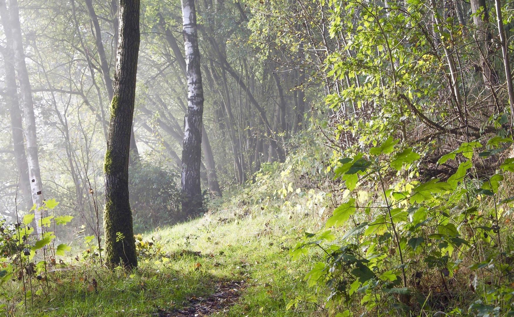 slide 4 - fog-1504977.jpg