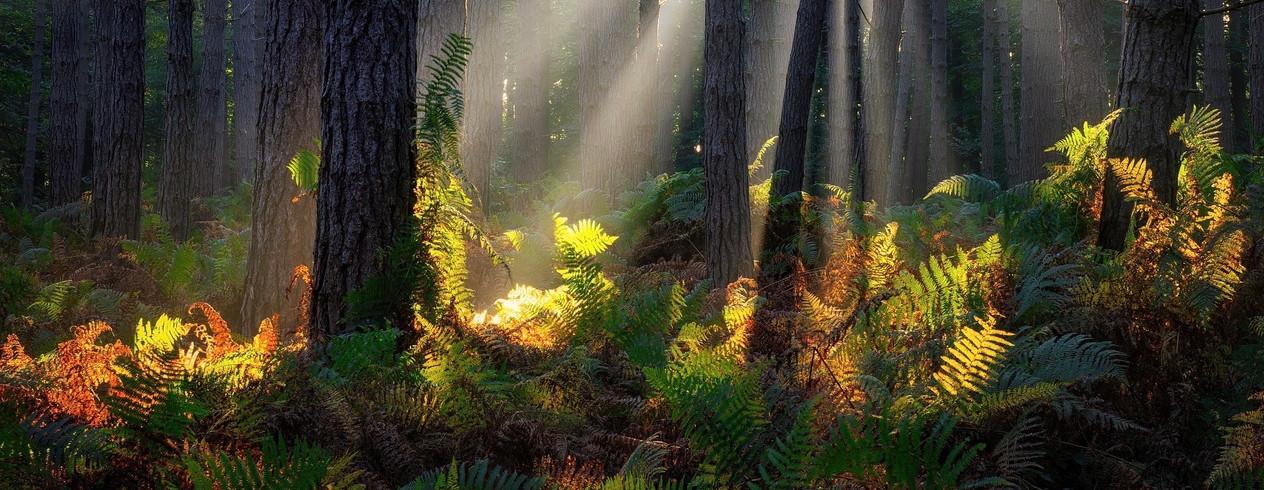 slide 19 - forest-of-carnelle-5030764_19