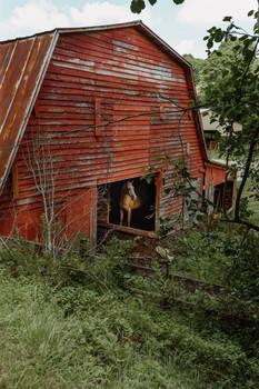 Horse in Barn, Crumpler 2019