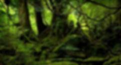 forêt_gillesguiffault.fr