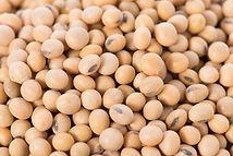 Limited-decrease-in-European-soybean-pro